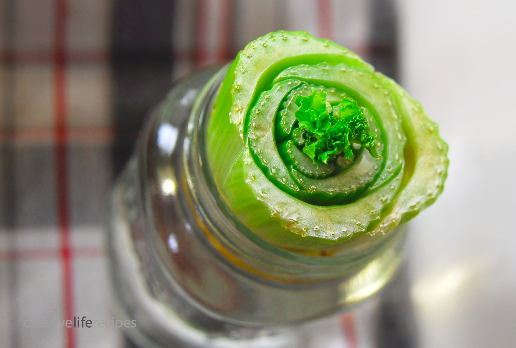 Regrow Celery Top 1 Week Creative Life Recipes