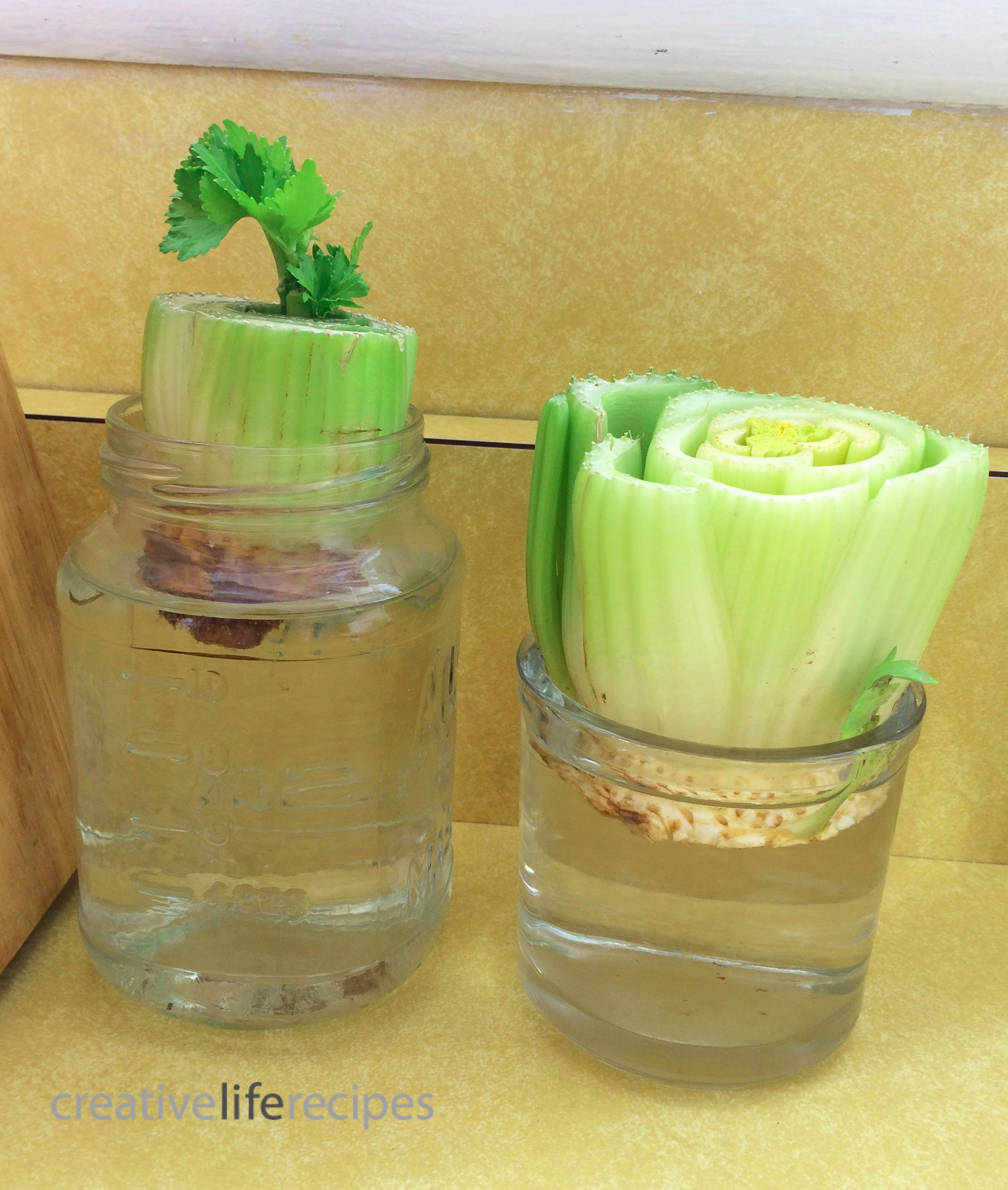 Regrow Celery Two Jars Creative Life Recipes
